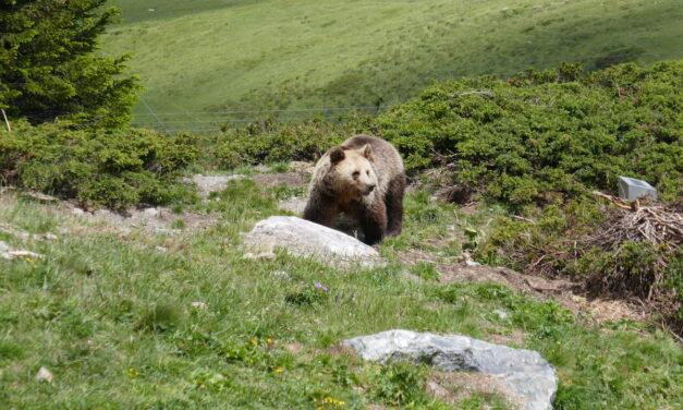 Mit dem Bärenzug der Rhätischen Bahn ins Arosa Bärenland – mit Übernachtungs- und Familienbiketipps!