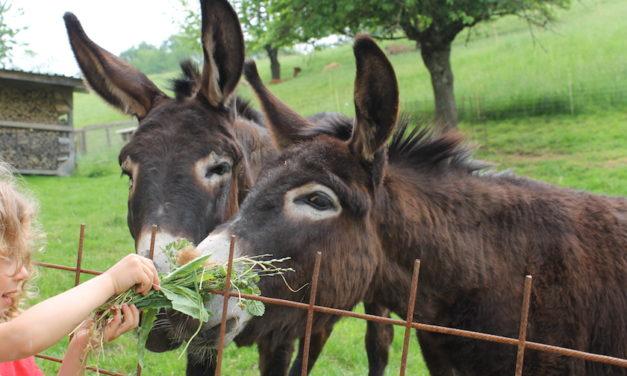 Ferien auf dem Arche-Hof Rüegg – Kurzurlaub in der Ostschweiz