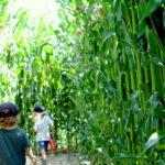 Das Maila Maislabyrinth in Langrickenbach am Bodensee ist ein tolles Ausflugsziel für die ganze Familie.