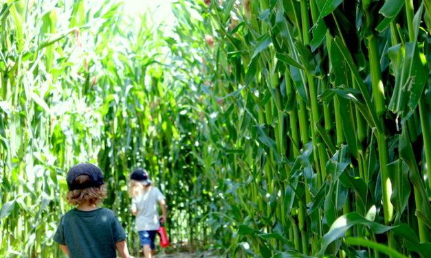 MAILA Maislabyrinth am Bodensee – das grösste Maislabyrinth der Schweiz