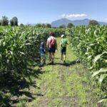 Familie unterwegs im Maislabyrinth