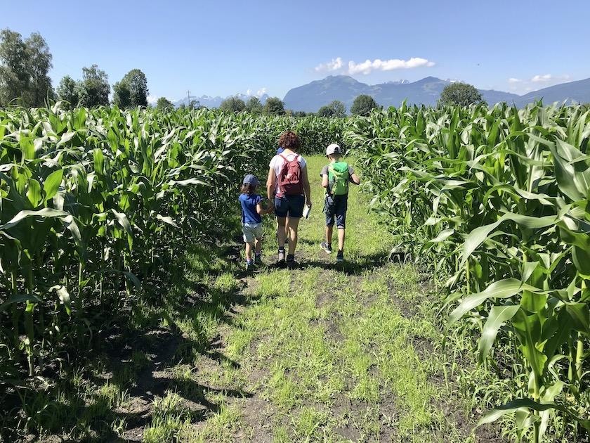 RhyLa – Das erste Maislabyrinth im St. Galler Rheintal