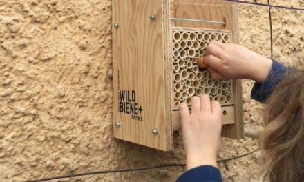 BeeHome Bienenhotel – keiner zu Klein Wildbienen Gotti/Götti zu sein