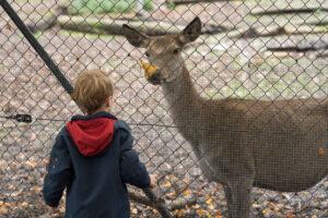 Hirschpark Luzern Kind