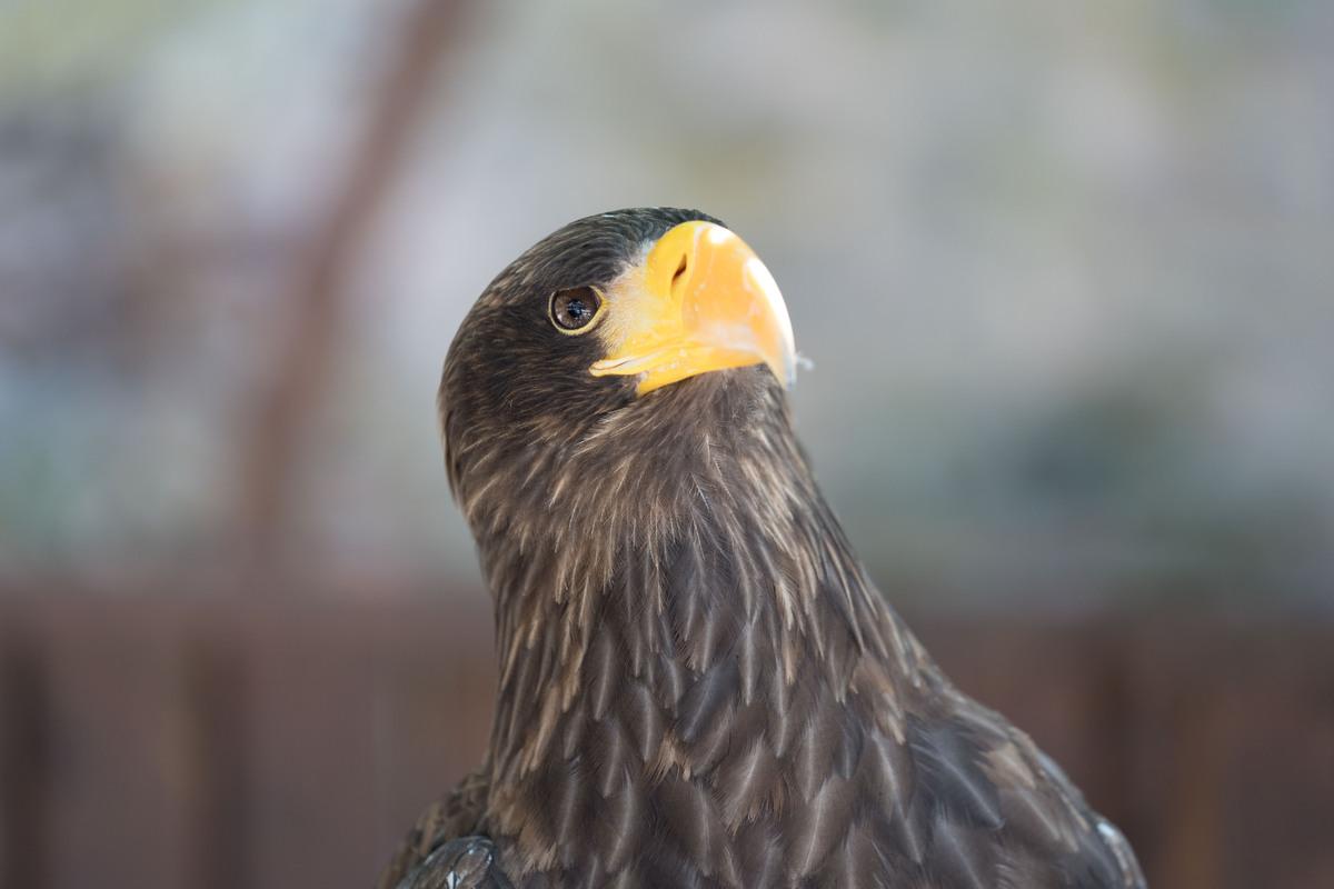 Kinder Tierschutz Krax Adler