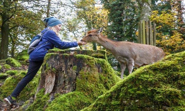 Kindergeburtstag im Tierpark Goldau – ein spannender Tag draussen bei den Tieren